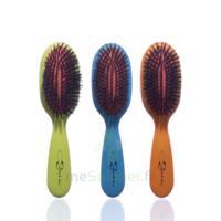 Cartel Brosse Cheveux Pneumatique Sanglier /1 à BORDEAUX